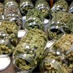 ¿Qué cantidad de marihuana te mataría de una sobredosis?
