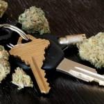 La legalización del cannabis redujo las muertes por accidentes de transito