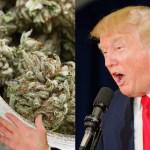 Trump elimina el sitio web de la Casa Blanca que expresa la oposición por parte de la presidencia a la legalización de la marihuana y otras drogas