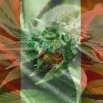 Ministerio de Salud en el Perú evaluará uso medicinal del cannabis