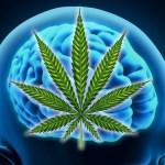 Estudio de Harvard confirma que el cannabis te hace más inteligente