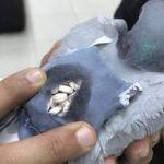 La policía captura una paloma que transportaba droga