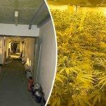 Tres hombres han admitido plantar más de 4.000 plantas de cannabis en un búnker nuclear