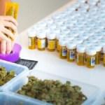 Cómo una compañía suiza planea surtir de cannabis legal a toda Europa