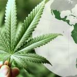 Cannabis: mina de oro verde en Latinoamérica