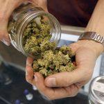 Industria de marihuana creará 250 mil empleos para 2020 en EUA