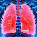 CDB reduce la inflamación de las vías respiratorias y la fibrosis en el asma alérgico