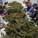 Los empleos de la industria del cannabis pagan un 11% más que el salario medio de los EE. UU. Y la demanda ha aumentado un 76%.