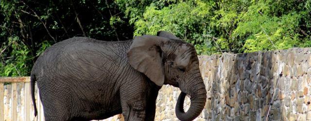 Elefante Zoo Polonia