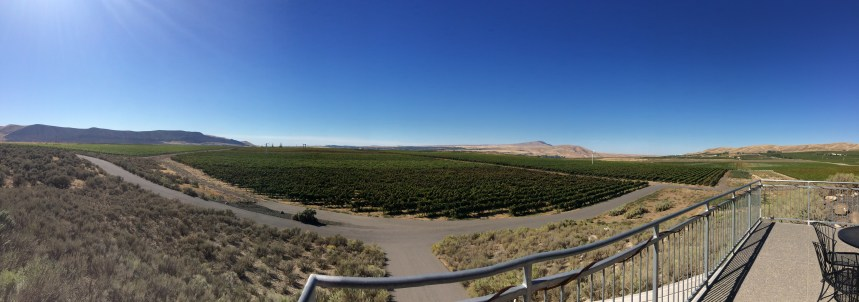 The vineyard -- Kiona sells 50% of their grapes to other wineries