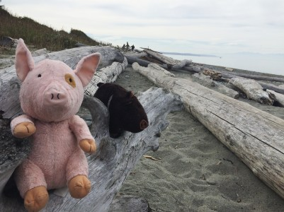 My stuffed pig travel companions Manny and Murphy at West Point Beach in Deception Pass State Park