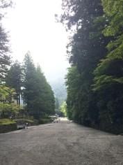 Tree giants along the walkway to Toshogu Shrine