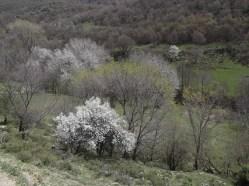 Пролет в Шарлия