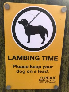 keep dogs on a lead at lambing time