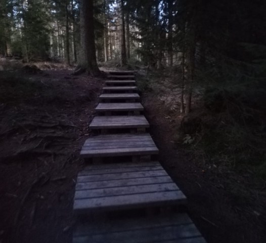 Pfad durchs Torfhausmoor