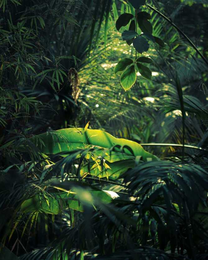 """Licht fällt durch den """"Dschungel"""" auf Blättern in der Biosphäre."""