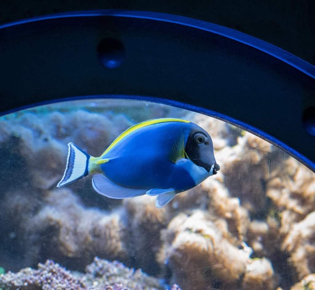 """In der Aquasphäre findet ihr Aquarien, die wie eine Art Bullauge in einem """"U-Boot"""" eingebaut sind."""