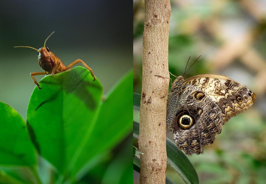 Insekten ganz nah in der Biosphäre. Fotografiert ihr sie gerne?