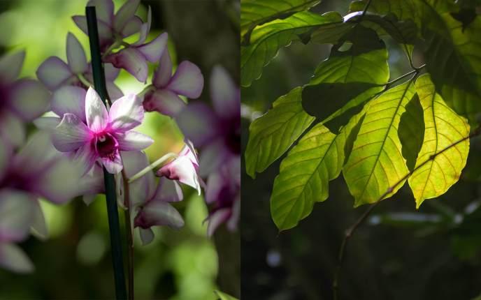 Das Licht ist überall, es bringt die Blätter zum Leuchten. Pflanzen fotografieren in der Biosphäre ist eine wahre Wonne.