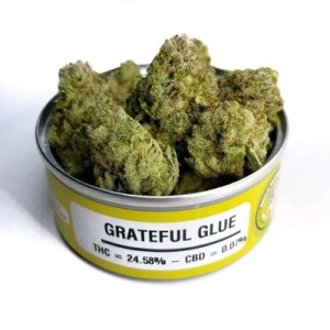 Space Monkey Meds Grateful Glue