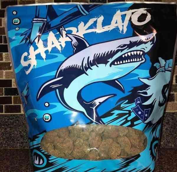 Buy Sharklato Runtz
