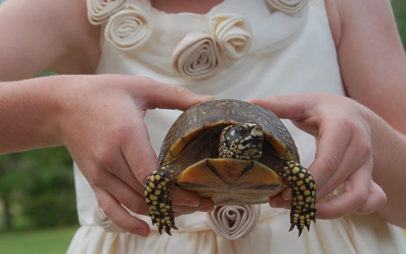 Chic~Turtle