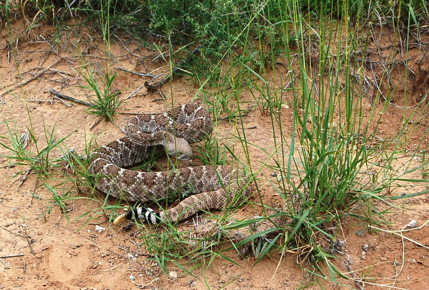 Can you see the footprint just below the snake on the left of the photo? (click photo to enlarge)