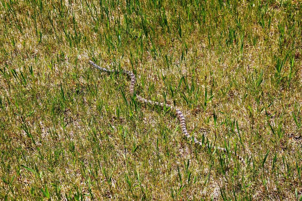 Unidentified very long snake. (Click photo to enlarge.)
