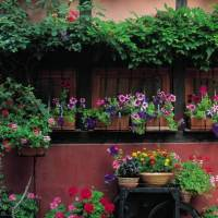 Floral Art Innovations: Wall or Vertical Gardening