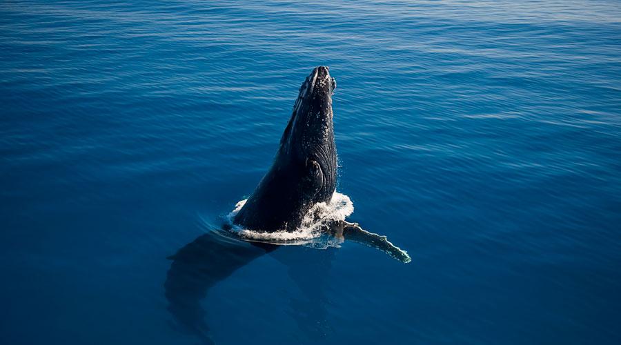 frazer-island-whales-900×500