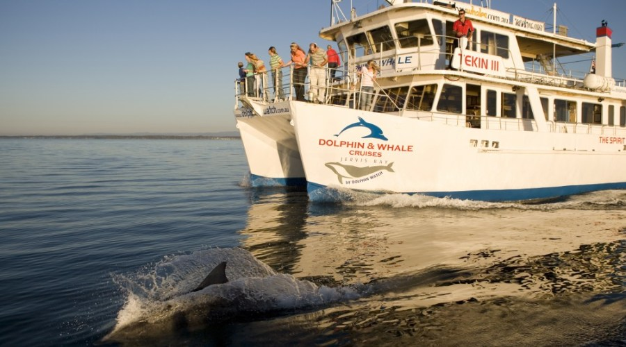 Jervis Bay Dolphin Cruise