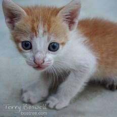 Photo - Blue Eyed Kitten