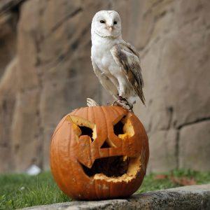"""Jak ,,správně"""" oslavit Halloween?"""