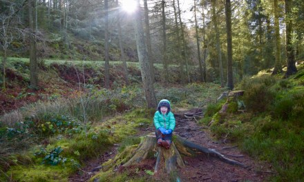 The Moorland View Trail at Coed Llandegla