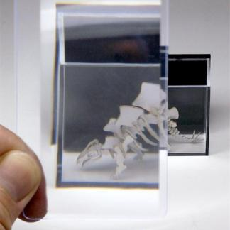 Wallet sized magnifier card 3x magnification made of polycarbonate for assembling Tinysaurs
