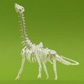 Assembled Brontosaurus tiny skeleton model by Tinysaur