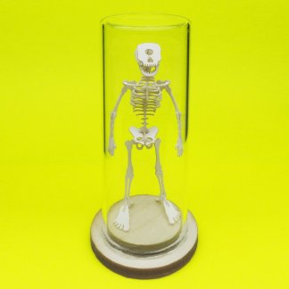 Cyclops All-in-one miniature skeleton model kit with glass display dome by Tinysaur.us