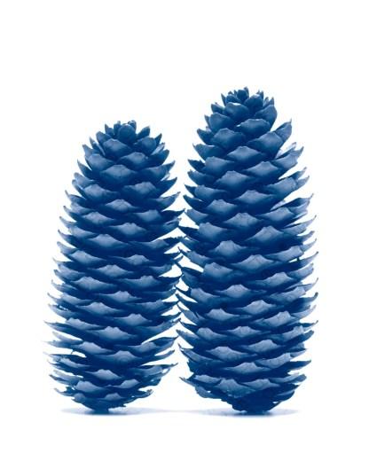 Pinecone 1