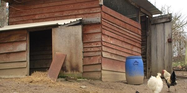 Poulailler construit avec des matériaux de récupération