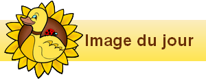 bannière widgets image du jour122