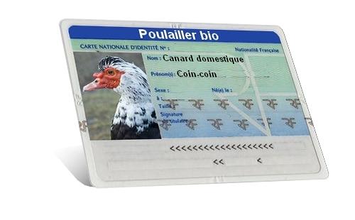carte identité canard
