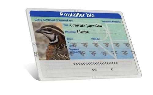 carte identité de la caille