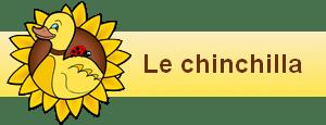 bannière widgets le chinchilla