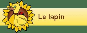 bannière widgets le lapin
