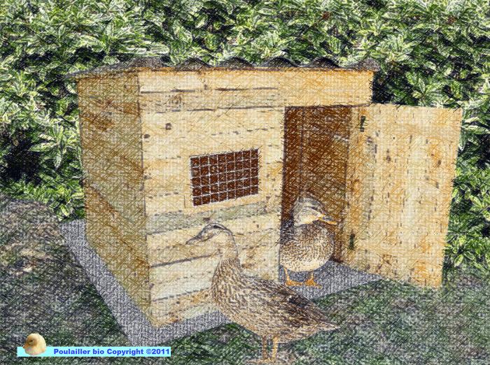 Construire une cabane pour les canards poulailler bio for Construire une cabane de jardin avec des palettes