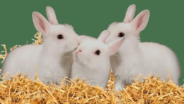 portée de lapine