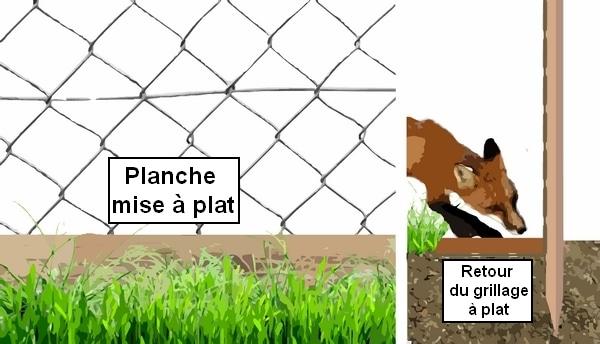 comment proteger poulailler contre le renard