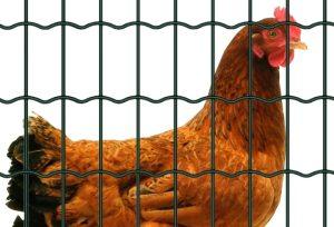 grillage soudé plastifié vert pour les poules et les volailles