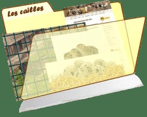 les fiches de la basses-cour bio - la caille