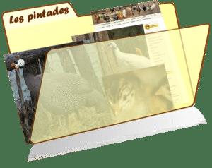 les fiches de la basses-cour bio - pintade